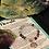 Thumbnail: Fluorite- Tree of Life