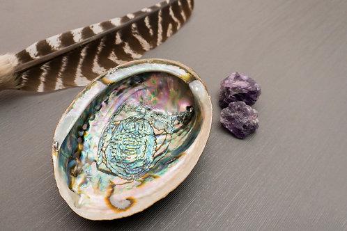 """Abalone Shell (6""""- 6 1/2"""")"""