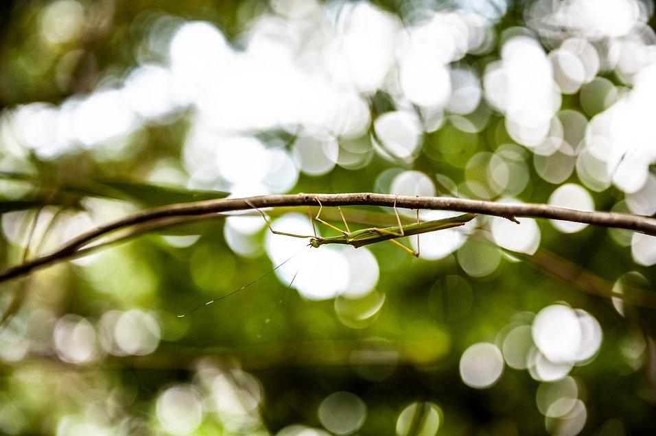 Praying mantis.jpg