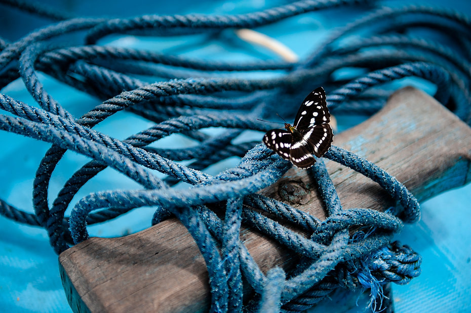 Butterfly with blue.jpg