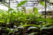 4 - Best seedling - Uba.jpg