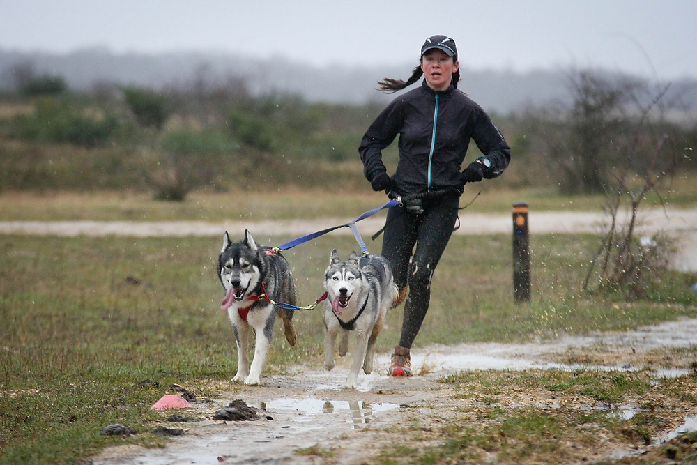 Canicross runner with her dogs