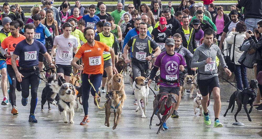 Canicross runners with their dogs