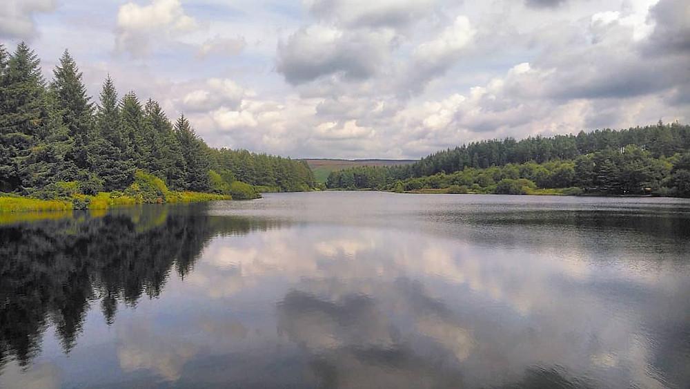 Dog Walk - Cod Beck Reservoir, Osmotherly