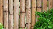 La favola della Felce e del Bambù