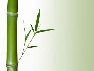 Come il bambù