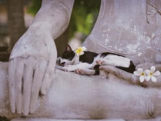 Neko, il gatto