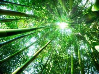 Simulare il bambù