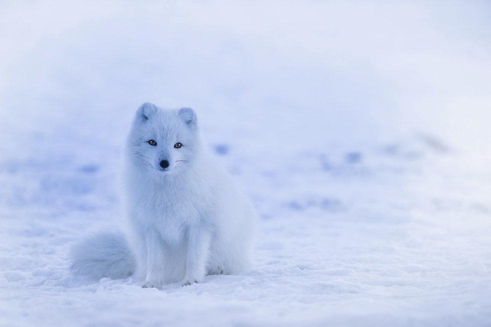 iceland-1979445_David Mark_Pixabay.jpg