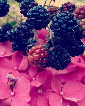 Le Rez de Jardin Albi.JPG
