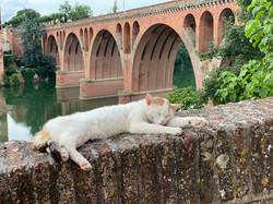 Un Chat à Albi
