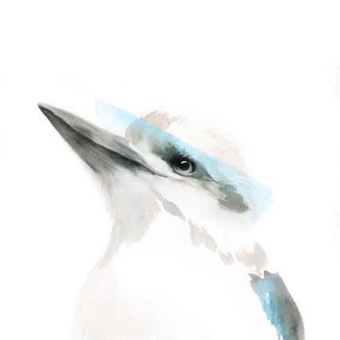 Bowie the Kookaburra, 2017