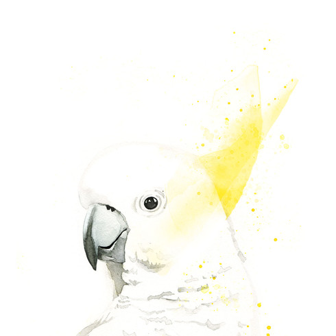 Sydney the Sulphur Crested Cockatoo