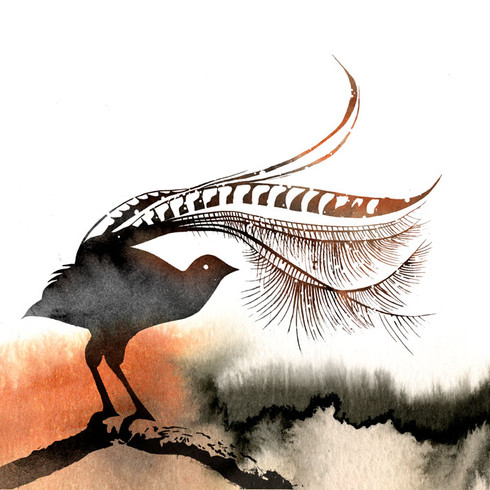 Lorenzo the Lyrebird