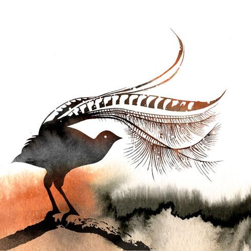 Lorenzo the Lyrebird, 2017