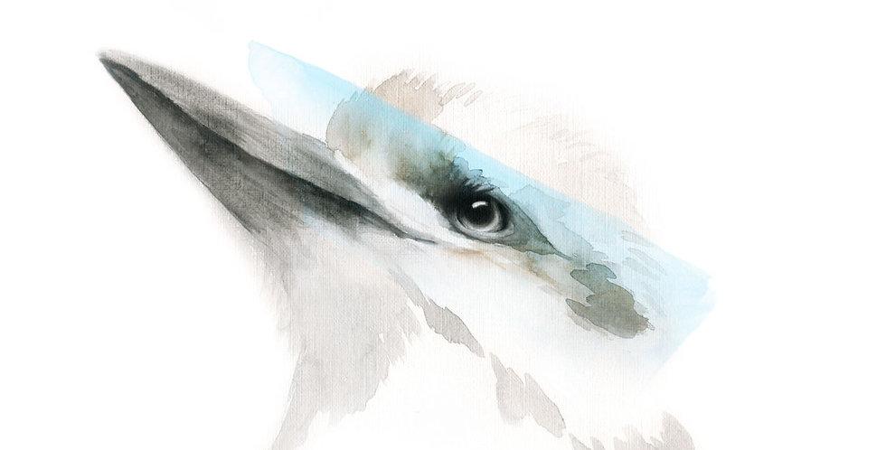 Bowie the Kookaburra