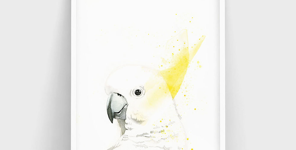 Sydney the Sulphur Crested Cockatoo