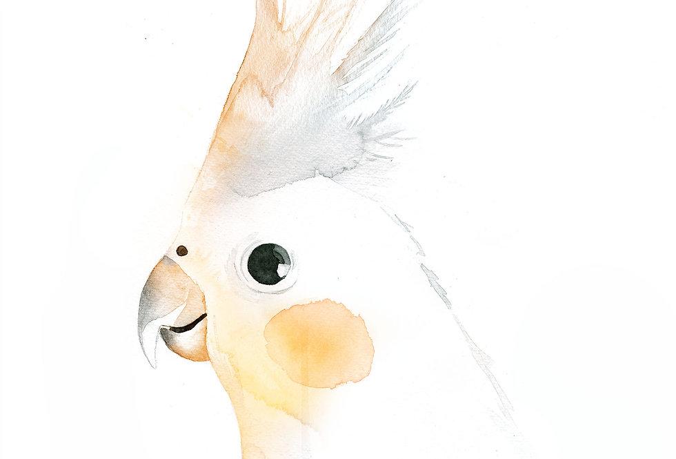 Carl the Cockatiel