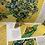 Thumbnail: Vazoda Zambaklar Üçgen Küpe