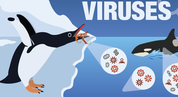 Hunting%20Viruses%20new-01_edited.jpg