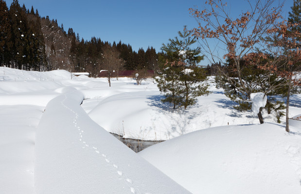 森のテラス冬