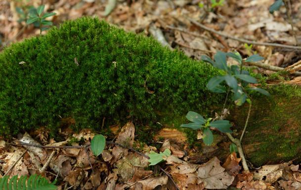 森のテラス苔