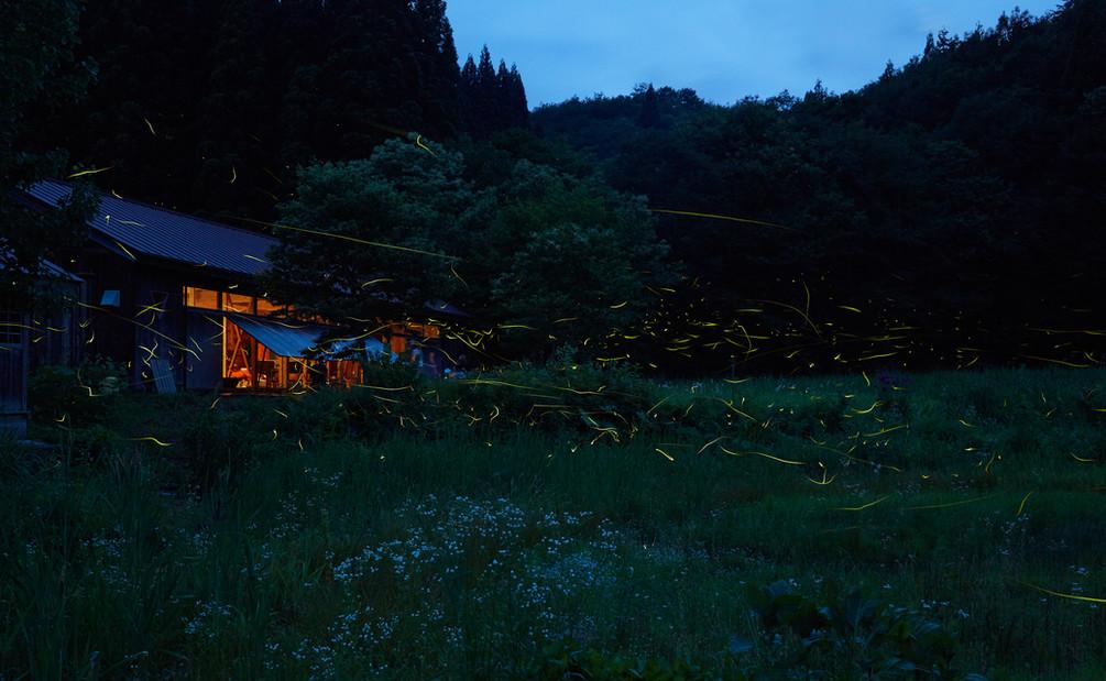 森のテラスホタル