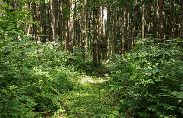 森のテラス森の中