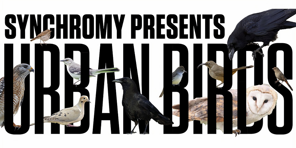 Urban Birds Live