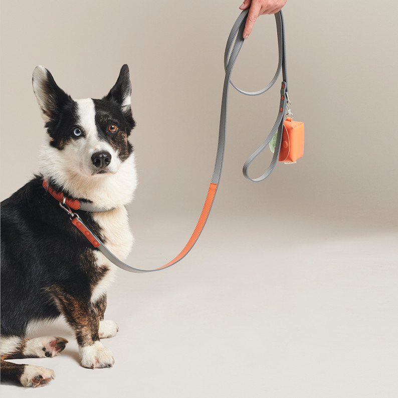 Pawness | campaign shoot