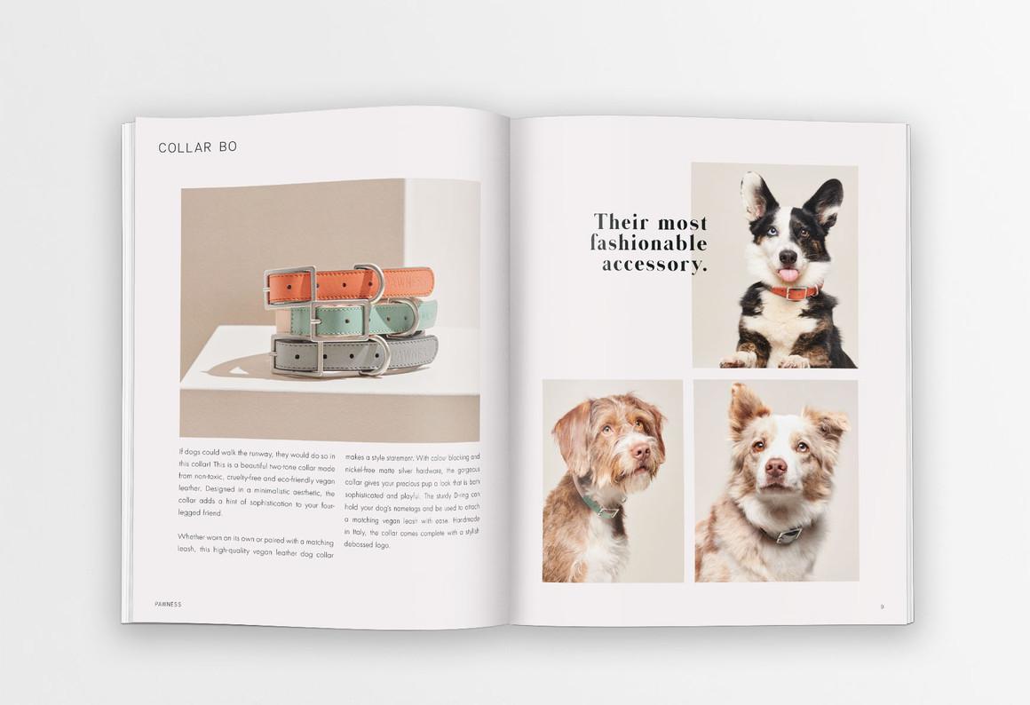 Pawness | Catalogue 20-21