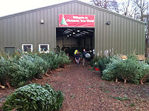 Christmas Trees Oxfordshire Berkshire