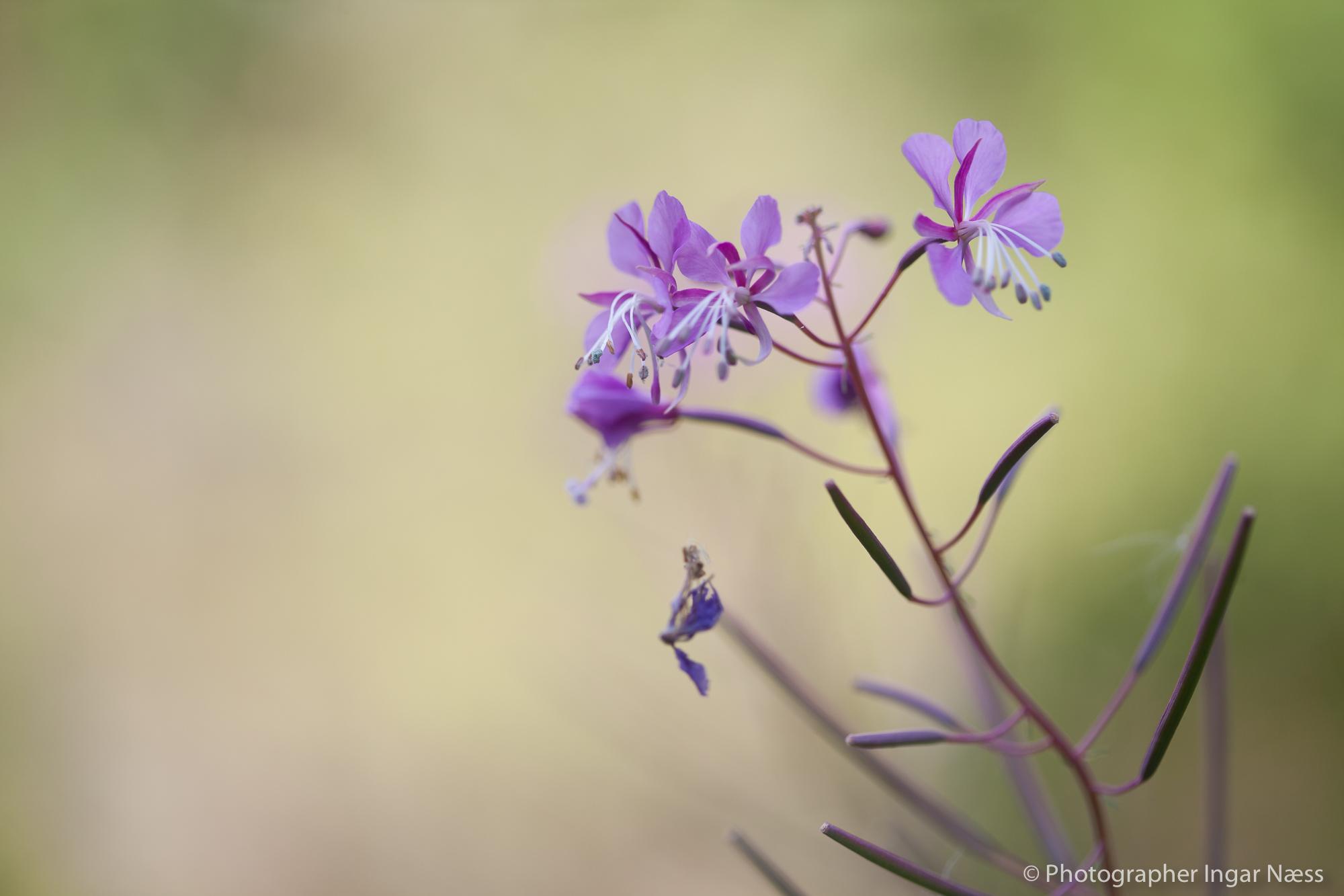 Blomstebilder dekor