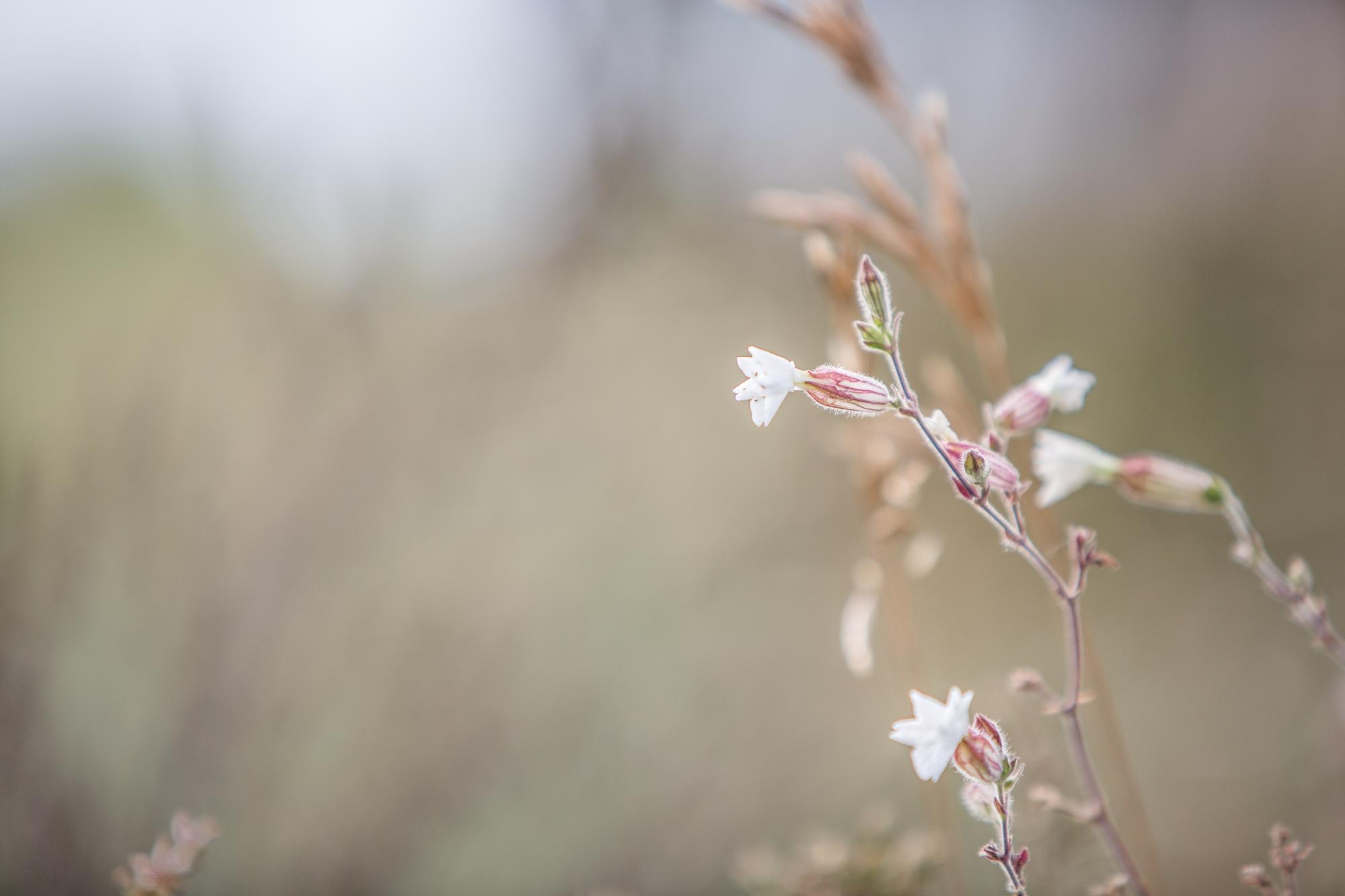 Blomster, veggdekor
