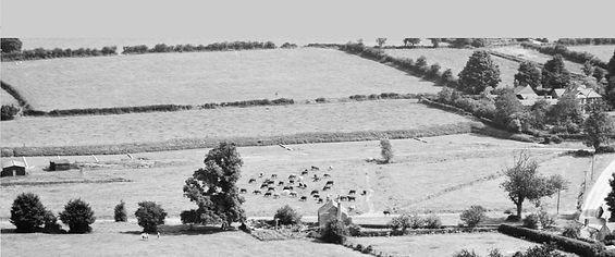 Bishop's Sutton,   Hop Gardens 1947 Aerial photo