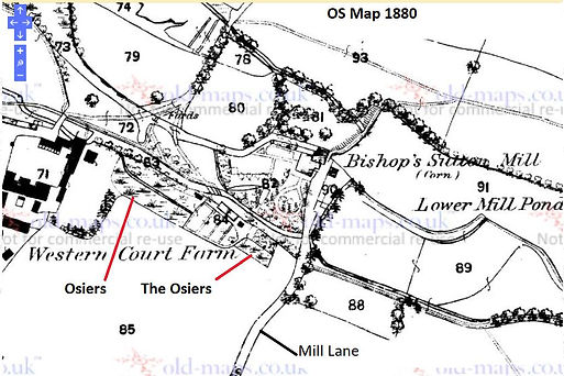Bishop's Sutton, Osiers and Witheys​, OS map 1880