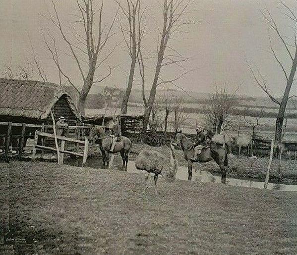 Bishop's Sutton, the Cripples 1895