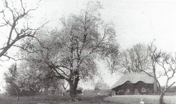 Bishop's Sutton, North Street Cottge