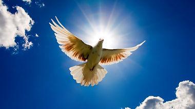dove-bird-sky-2400x1350-wallpaper.jpg