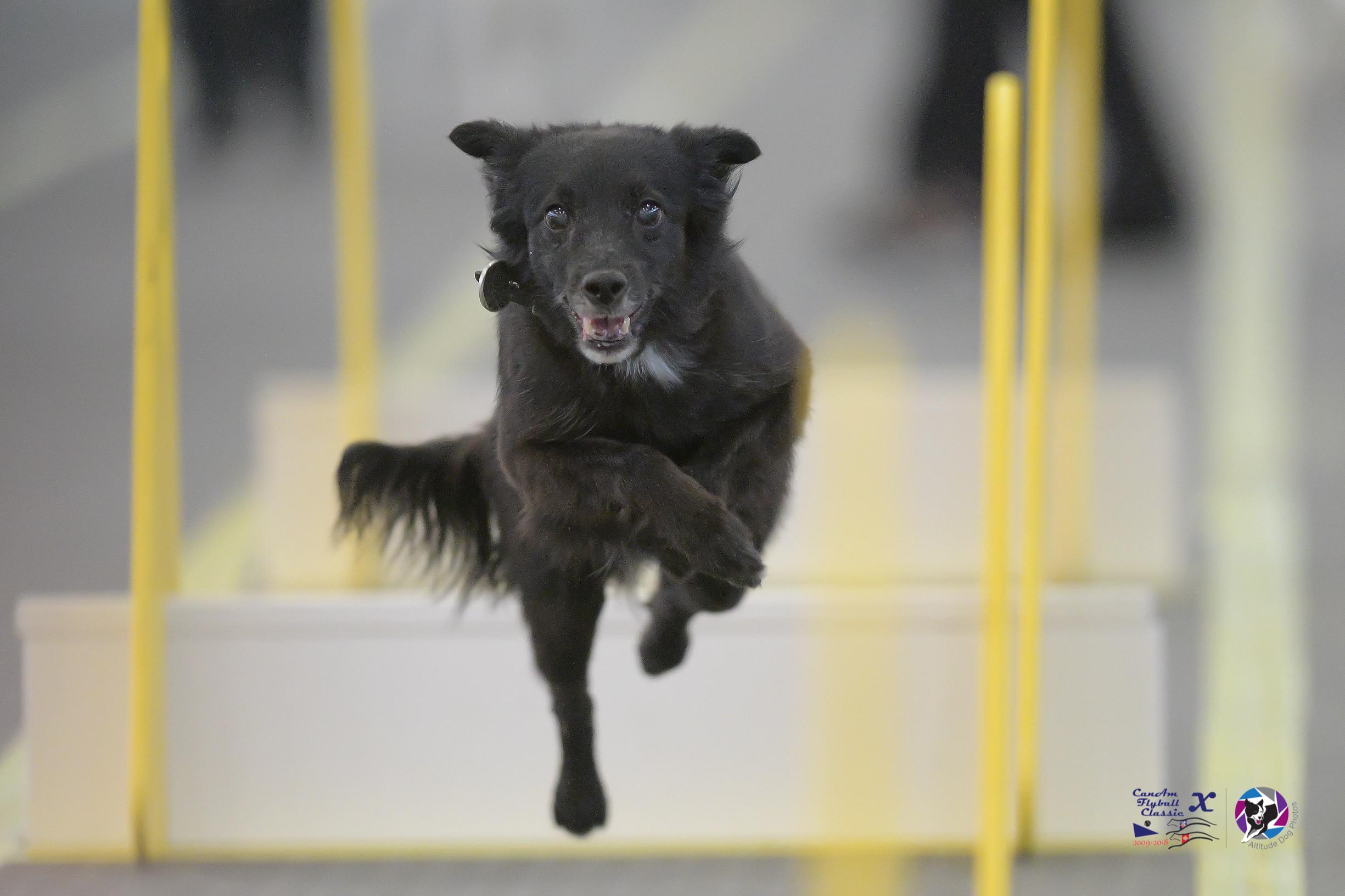 Circus FMX, IRON DOG