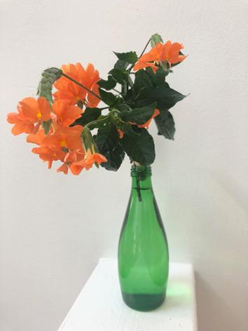 Crossandra orange - Jeanette Ching