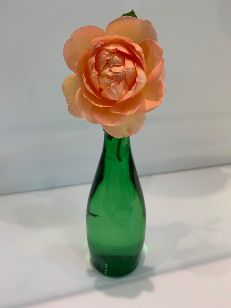 Rosa sp. - Robin Gosnell