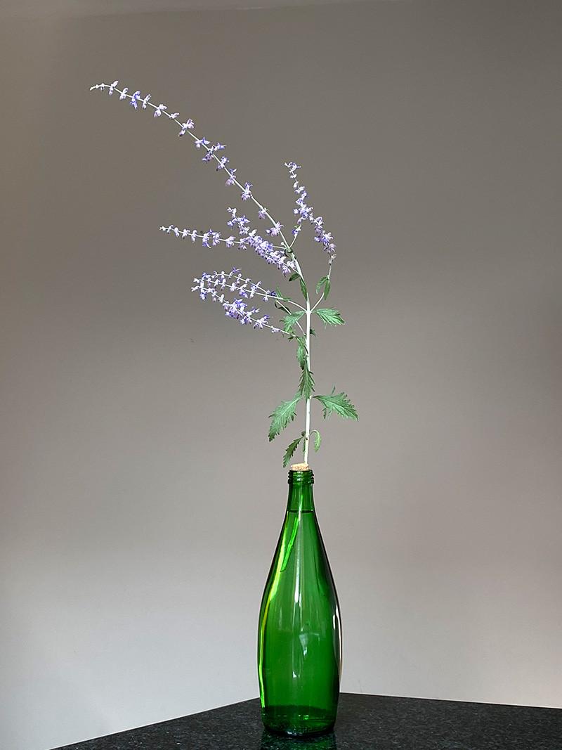 Salvia yangii - Linda Pond