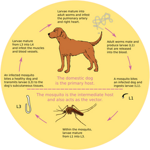 Heartworm Treatment Options