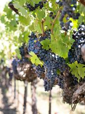 Georgia Wineries Day Trip