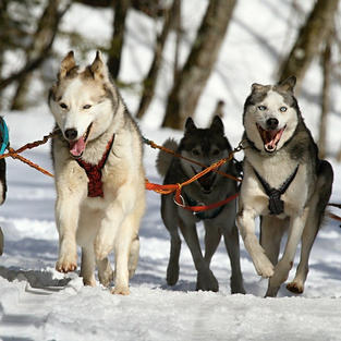 Mush your way to breakfast in a Finnish sleigh, and lead your own dog sled team.