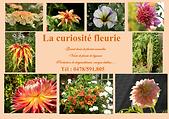 CURIOSOITE FLEURIE.png