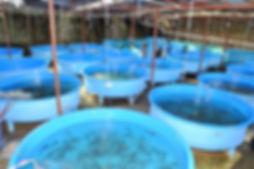 Indoor Aquaculture