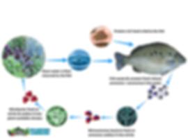 Aquaponic nitrogen cycle