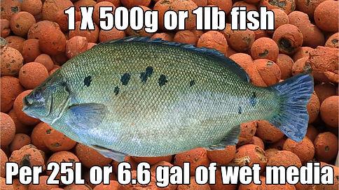 Fish & Media Rule-min.jpg